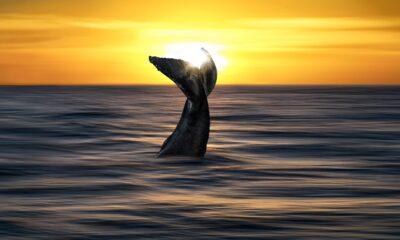 Pepe_Soho_Whisper_of_the_Sea