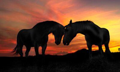 Pepe_Soho_Lovely_Sunset