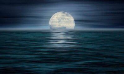 Pepe_Soho_Moonlight