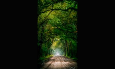 Pepe_Soho_Mystic_Road