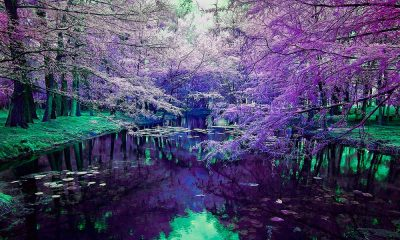 Pepe_Soho_Purple_Dream