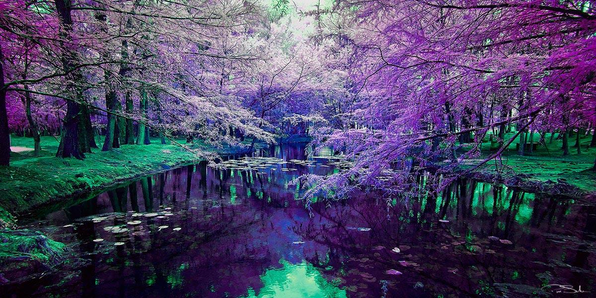 Pepe_Soho_Purple_Dream