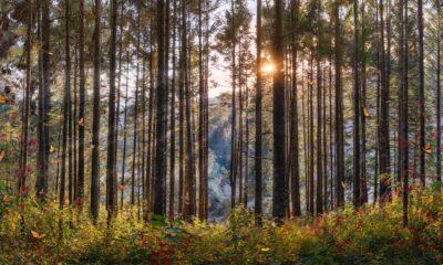 Pepe_Soho_Sacred_Forest