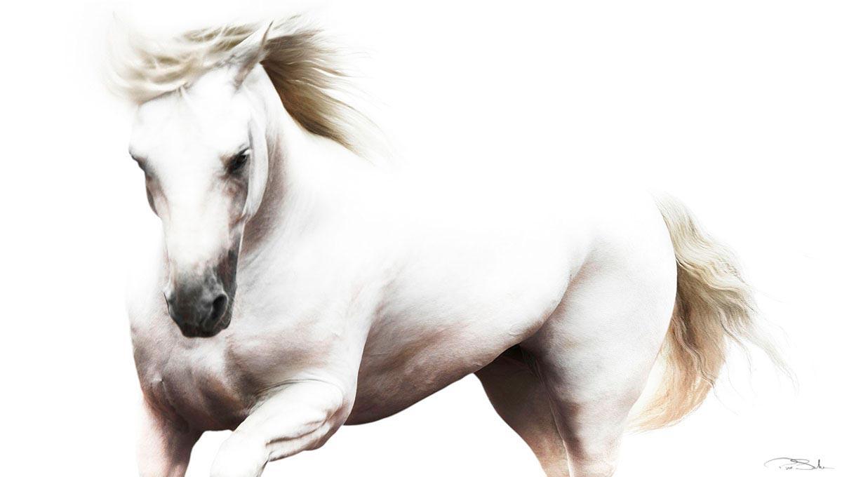 Pepe_Soho_White_Majesty