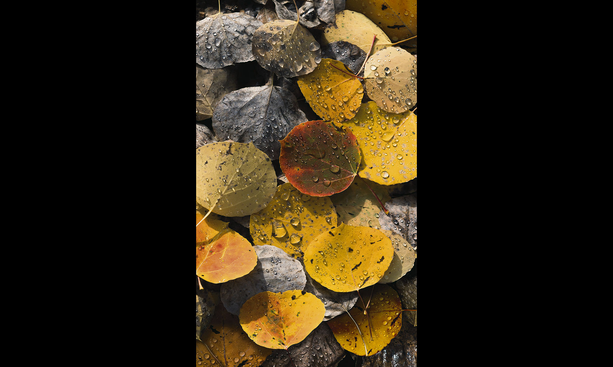 Pepe Soho - Gotas de otoño II