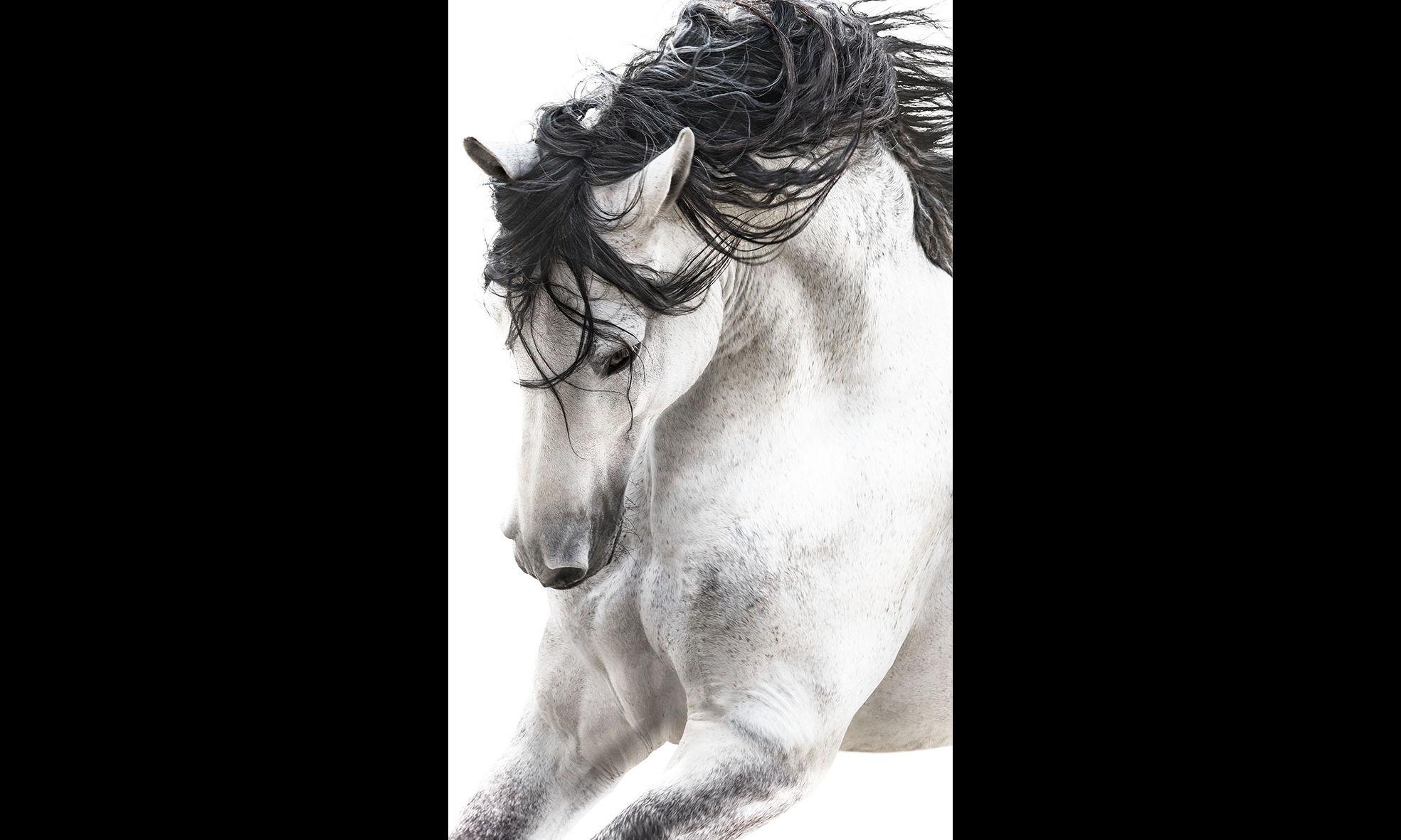 Pepe Soho - Stallion